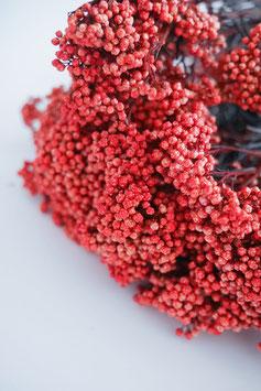 Stabilisierte Diosmi - Strauß Rot Trockenblumen
