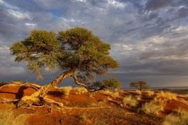 Namib Wüste 3