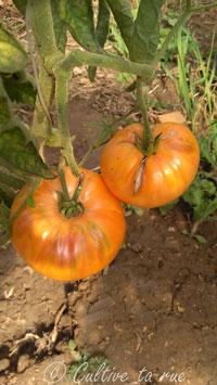 Mennonite Orange