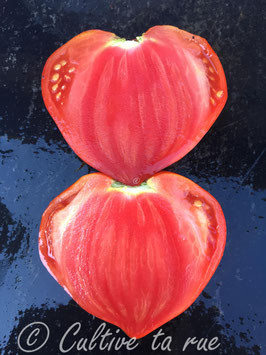 Sheryl's Portuguese Red Heart