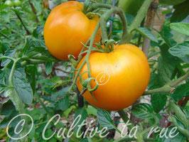 Vallin orange