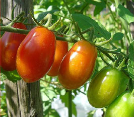 Pomodorini di sardegna