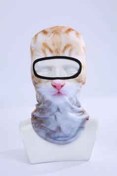 Katze Jimmy Kopfpariser