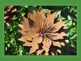 Edelrost Blume - Chrysantheme Anastasia