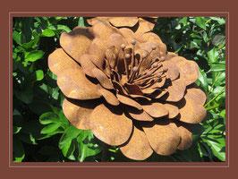 Edelrost Blume - Wilde Rose
