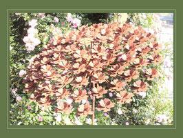 Edelrost Blume - Tellerhortensie