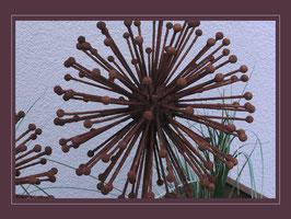 Edelrost Blume - Allium
