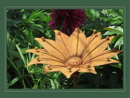 Edelrost Blume - Sonnenbraut