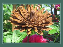 Edelrost Blume -  Aster