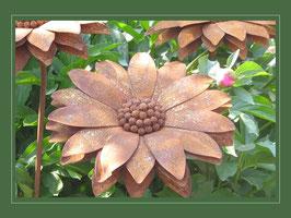 Edelrost Blume - die kleine Sonnenblume