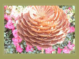 Edelrost Blume - Ranunkel - in voller Blüte