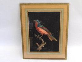 Dessin oiseau rouge Galerie Vandevoorde Paris / Red bird Galerie Vandevoorde Paris