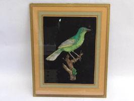 Dessin oiseau vert Galerie Vandevoorde Paris / Green bird Galerie Vandevoorde Paris