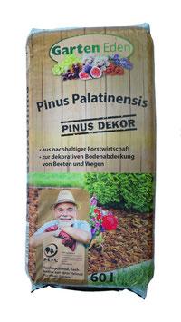 Pinus Palatinensis 60 L
