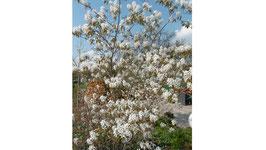 Bio Kupferfelsenbirnenblüten  Hydrolat