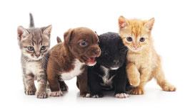 Welpen/ Kitten bis zum 6. Lebensmonat