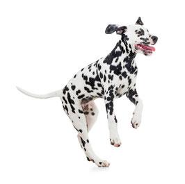 Junghunde 6. bis 12. Lebensmonat