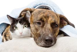 Kranker Hund/ Katze