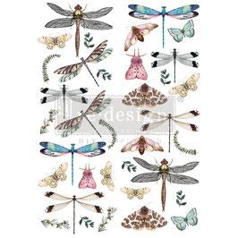 Transfer - Dragonflies