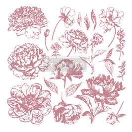 Stamps - Linear Floral