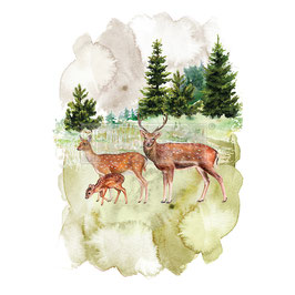 Transfer - Deer