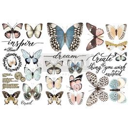 Transfer - Papillon