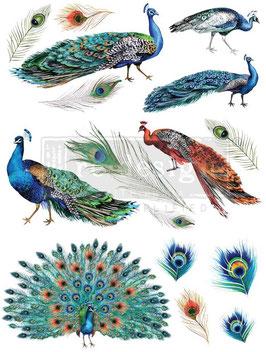 Transfer - Peacock