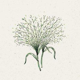 Jora Dahl Panicum virgatum 'Fontaine' Rutenhirse