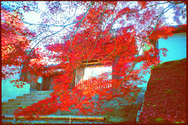 「京都の名刹 Vol.2 洛東・洛北の名刹」全8巻セット ADV-085