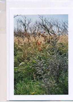 Seelenfaltkarte mit Kuvert Titel: Inselblick