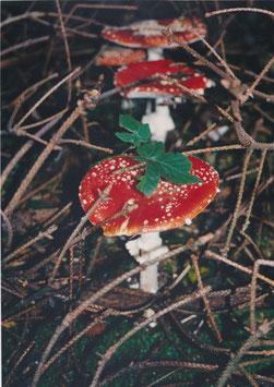 Fotografie mit dem Titel: ein Männlein steht im Walde