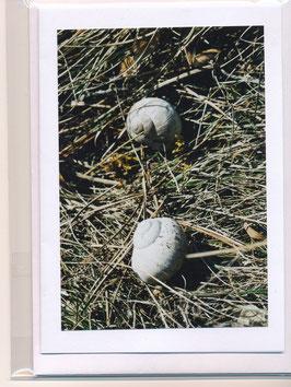 Seelenfaltkarte mit Kuvert Titel: zwei Schneckenhäuser