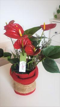 Blühende Zimmerpflanzen Überraschung