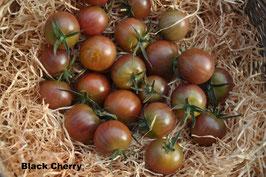 5 verschiedene Cherrytomaten