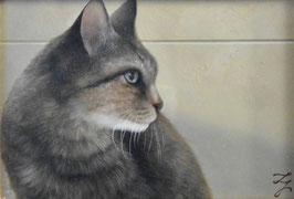 米村太一「視線」動物画 油彩SM号 真作保証 リアリズム期待の実力画家 猫画の最高傑作