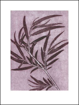 """Limited Print """"WILLOW PLUM"""""""