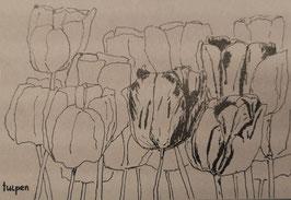 Grusskarte Tulpen (Kreditkartengrösse)