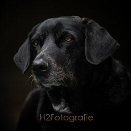 Profi Portrait von deinem Hund