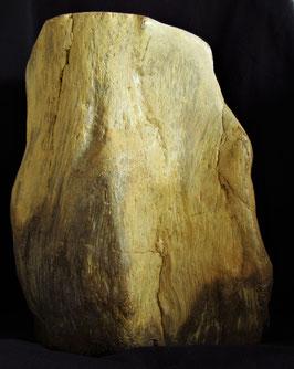 Versteinertes Holz Indonesien