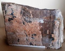 Versteinertes Holz Namibia