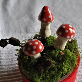 Mini-Pilzchen Dotty