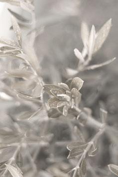 Bild Blätter