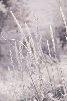 Bild Gräser