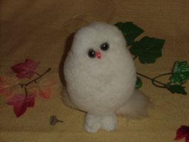 癒しの白フクロウ③