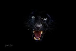 """The black Black Panther"""