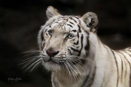 Tigerin - Heike