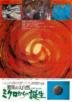 驚異の大自然 ミクロからの誕生(丸の内東宝/チラシ洋画)