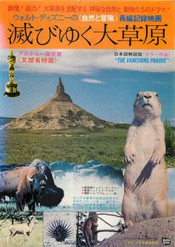 滅びゆく大草原(ニコー劇場/チラシ洋画)