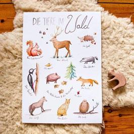 """Poster """"Die Tiere im Wald"""" DIN A3"""