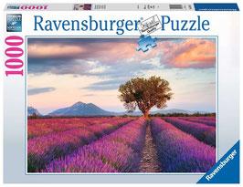Ravensburger Puzzle - Lavendelfeld in der goldenen Stunde - 1000 Teile